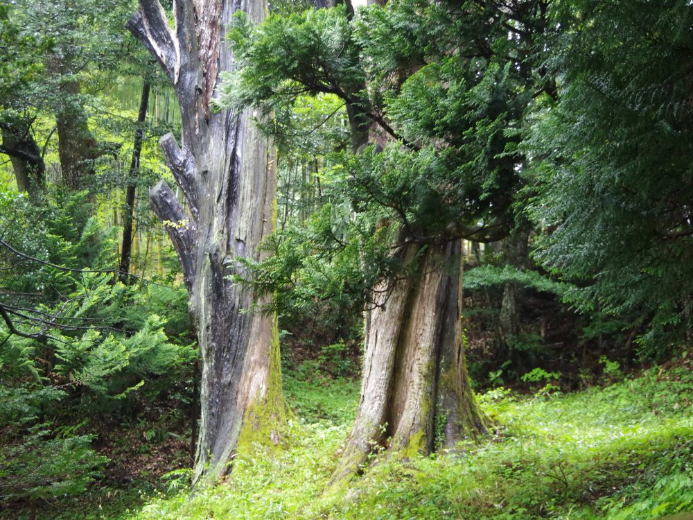 hirazara